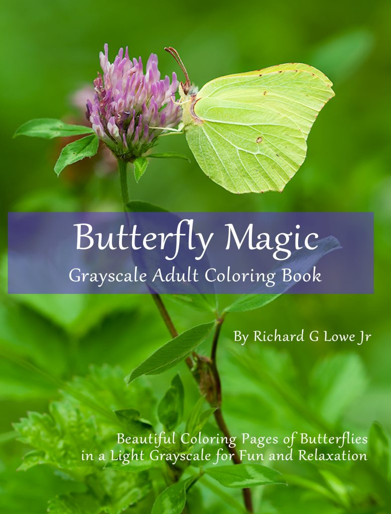 Butterfly Coloring Book Grayscale